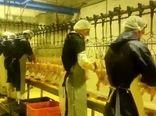 روند تولید و تامین گوشت مرغ در چهارمحال و بختیاری