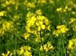 دستاوردهای وزارت جهاد کشاورزی در زمینه ارتقا بهره وری، رونق تولیدات کشاورزی و تامین امنیت غذایی به مناسبت آغاز سال زراعی 98-99