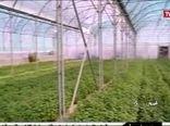 نهضت توسعه کشت های گلخانه ای در کشور