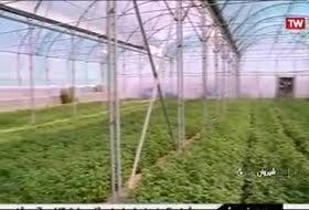 توسعه 1600 هکتاری گلخانه ها در هفت ماه نخست امسال