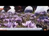 صحبت های وزیر جهاد کشاورزی در مورد خرید تضمینی زعفران