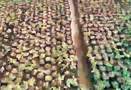 گزارش سفر رئیس کمیسیون کشاورزی، آب، منابع طبیعی و محیط زیست مجلس شورای اسلامی به استان چهارمحال و بختیاری