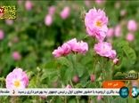 دومین کنفرانس بینالمللی گل محمدی در کاشان برگزار شد