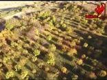 احداث باغات جدید در استان زنجان