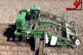 برداشت و بسته بندی مکانیزه سیب زمینی