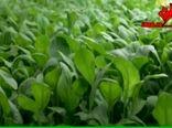 آینده کشاورزی و غذا در گذر تغییرات آب و هوایی