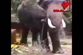 شستن فیلها در هوای گرم تابستان