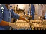 تولید تخم مرغ بیش از نیاز کشور است